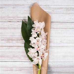 Šopek orhidej iz sopek.si