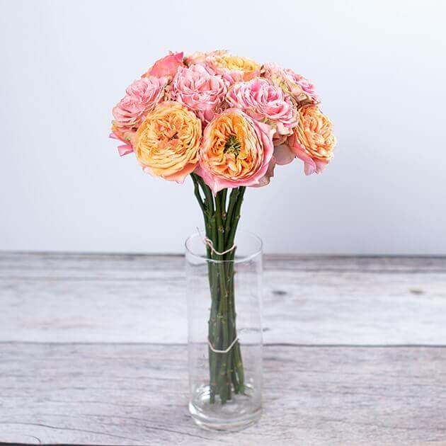 Šopek angleške vrtnice v vazi