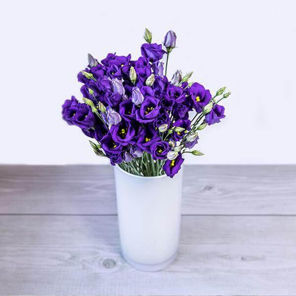 Šopek liziantus v vazi