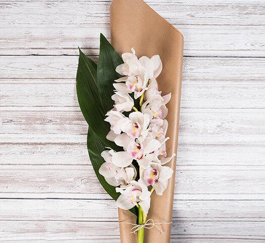 Sopek iz orhidej