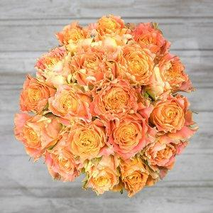 vrtnice louise