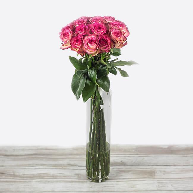 šopek vrtnic paloma