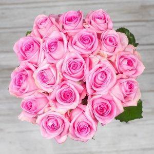 šopek vrtnic revival