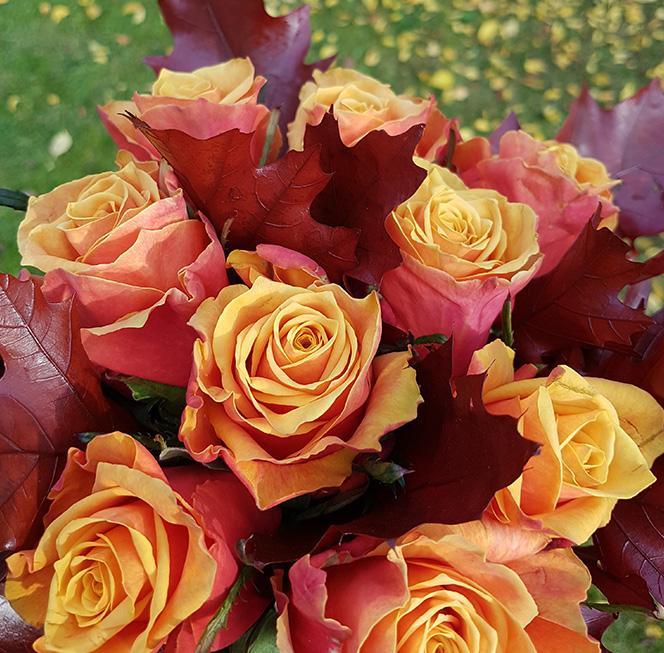 sopek-vrtnice-jesen